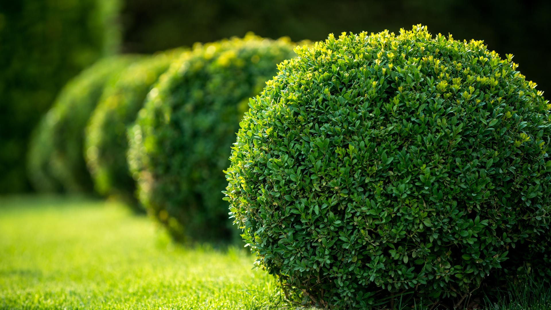Professionally trimmed shrubs that are planted along a property in Fairlawn, OH.