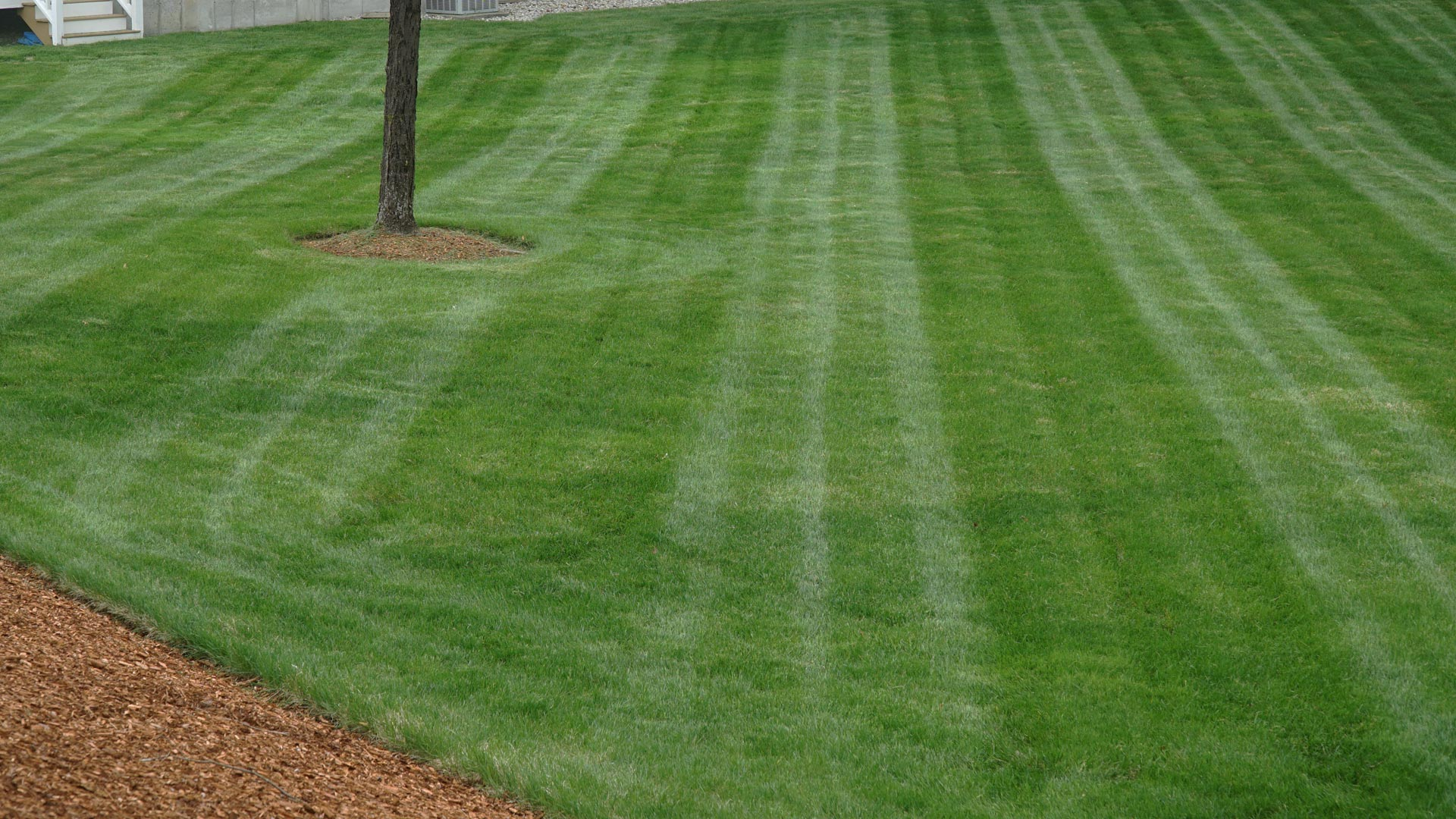 Well maintained lawn mowed with diagonal lawn striping.