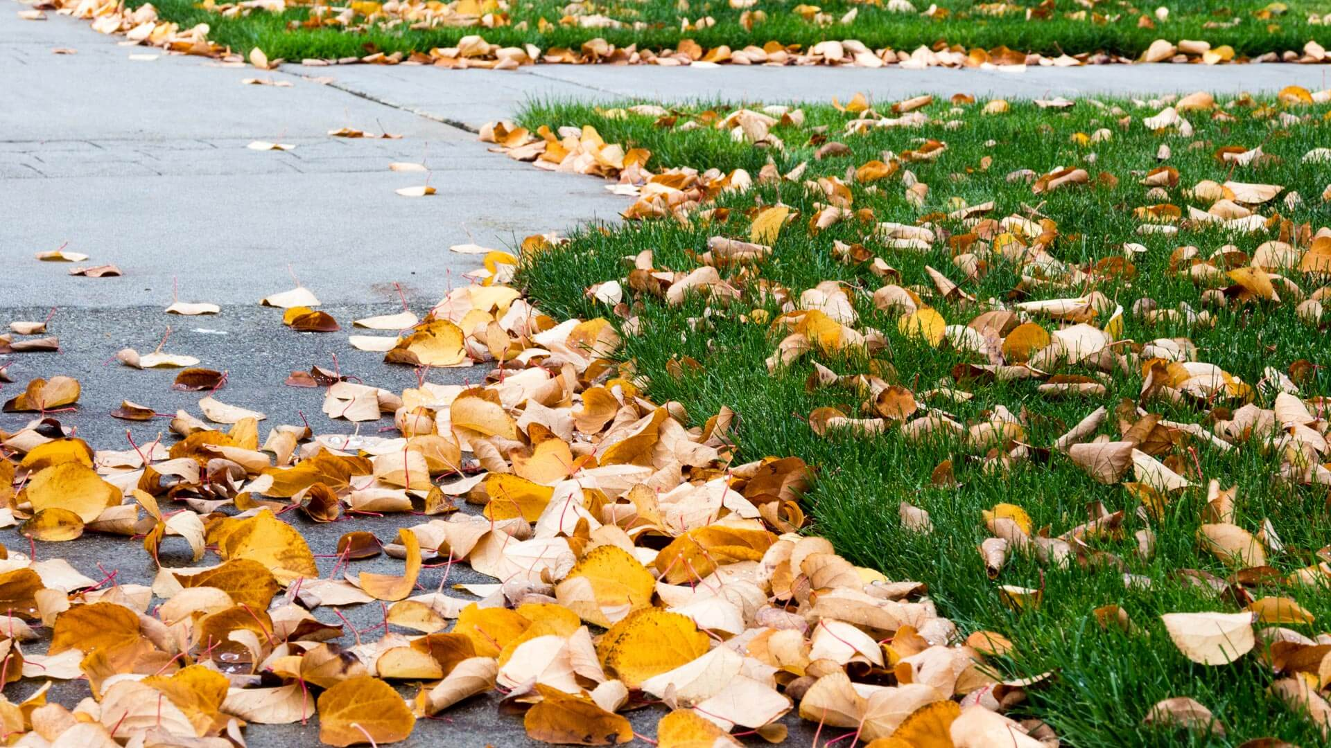 Leaves scatter throughout the lawn, driveway, and sidewalk ready for our leaf removal service.