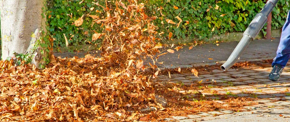 One of our employees blowing fall leaves into a pile ready for our vacuum truck to remove them.