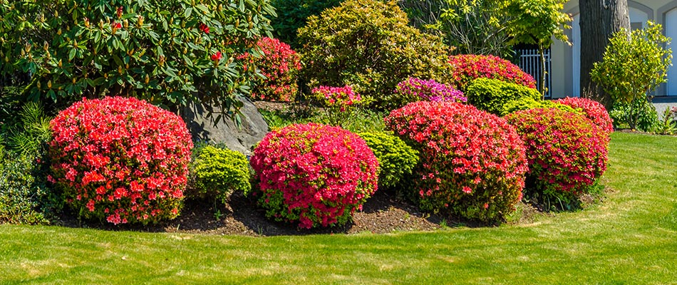 We recently trimmed these shrubs at a property in Montville Township, OH.