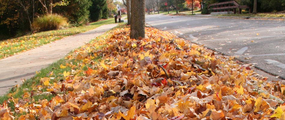 Leaves that have fallen during the fall in Medina that will need cleaned up by our crew.